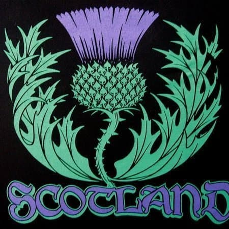 Scotland T-Shirt with Thistle by Maxine Miller ©celticjackalope.com