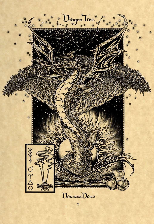 DragonTree Parchment Print - Maxine Miller