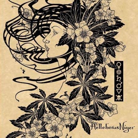 Hellebore Magical Botanical Art Print by Maxine Miller ©celticjackalope.com