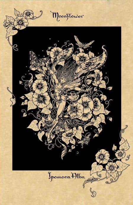 Moonflower Magical Botanical Art Print by Maxine Miller ©celticjackalope.com